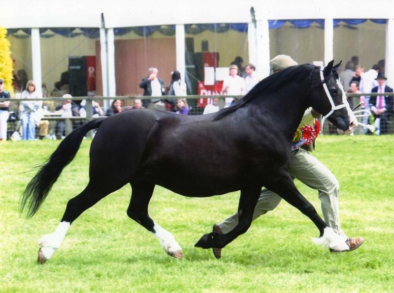 my fair lady pony
